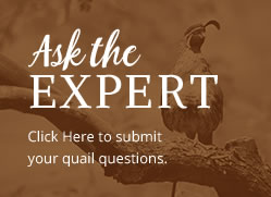 Ask the Expert - quail